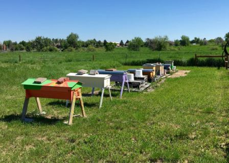 Bee Keeping at DeLaney Community Farm